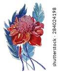 ginger flowers. watercolor...   Shutterstock . vector #284024198