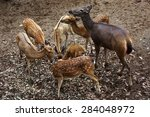 the spotted deer in the zoo | Shutterstock . vector #284048972