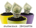 Growing Money In Colorful...
