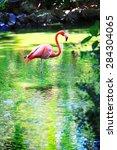Single Pink Flamingo Standing...