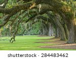 A Row Of Old Oak Tree From A...