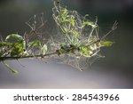 Cobweb on branch - stock photo