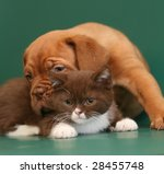 Stock photo puppy and kitten 28455748