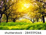 sunny morning at summer garden | Shutterstock . vector #284559266