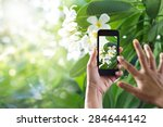 Taking Pictures White Flower...