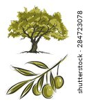 vector sketch of olive tree | Shutterstock .eps vector #284723078