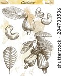 cashew set of vector sketches... | Shutterstock .eps vector #284733536