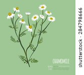 chamomile bouquet greeting card ... | Shutterstock .eps vector #284798666