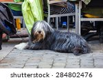 Bearded Collie Sitting At A...
