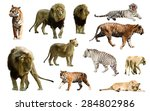 set of  lions and tigres.... | Shutterstock . vector #284802986