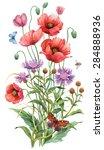 wild flowers. persian... | Shutterstock . vector #284888936