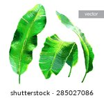 palm banana leaves isolated on... | Shutterstock .eps vector #285027086