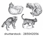 collection of cats on a white... | Shutterstock . vector #285042056