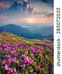 blossom carpet of pink... | Shutterstock . vector #285072035