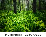lily of the valley  | Shutterstock . vector #285077186