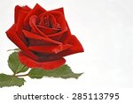 a fresh red rose | Shutterstock . vector #285113795