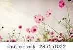 purple  pink  red  cosmos... | Shutterstock . vector #285151022