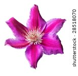 Pink And Purple Clematis...