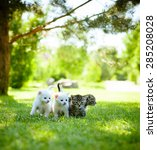 Stock photo four little kitten walking on the green grass 285208028