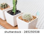 beautiful cactus in a cup with... | Shutterstock . vector #285250538