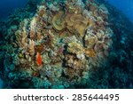 tropical fish on background of... | Shutterstock . vector #285644495