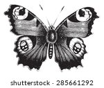 Stock vector vanessa peacock butterfly vintage engraved illustration natural history of animals 285661292
