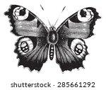 Vanessa Peacock Butterfly ...