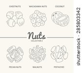 set of six nuts. chestnuts ... | Shutterstock .eps vector #285803342