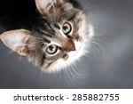 Stock photo little fluffy kitten on a gray background 285882755