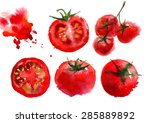 red tomato watercolor vector... | Shutterstock .eps vector #285889892