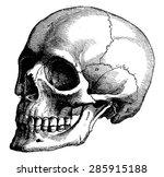 Skeleton Of The Human Head ...
