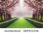 the romantic tunnel of pink...   Shutterstock . vector #285922196