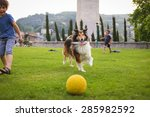 Stock photo two little boys playing with a collie dog with the ball in the park 285982592
