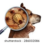 Stock photo pet tick as a group of dog and cat ticks in the fur as a close up magnification of a female 286032086