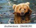 Close Up Of A Big Brown Bear...