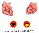 coronary heart disease   Shutterstock .eps vector #28618678