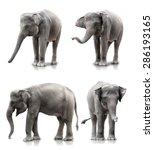 Set Of Elephant Isolated Over...