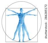 vitruvian human or man as a...   Shutterstock . vector #286285172