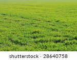 green grass texture  green... | Shutterstock . vector #28640758