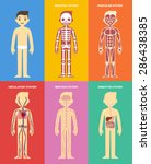stylized human body anatomy... | Shutterstock .eps vector #286438385