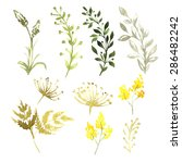 set of flowers painted in...   Shutterstock . vector #286482242