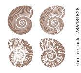 Seashells Nautilus Vintage...