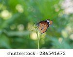 Butterfly And Flower Common...