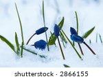 flowers of scilla sibirica... | Shutterstock . vector #2866155