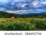 Flowers On Hill With Beautiful...