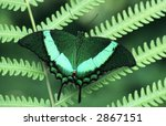 Closeup Of A Green Butterfly I...