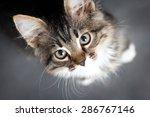 Stock photo little fluffy kitten on a gray background 286767146