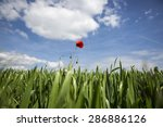 Lonely Red Possy Flower In A...