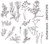 set of hand drawn meadow plants. | Shutterstock .eps vector #286924196