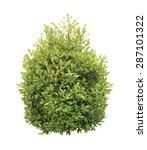 green bush isolated on white... | Shutterstock . vector #287101322